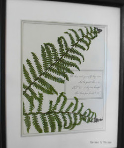Framed Woodland Ferns