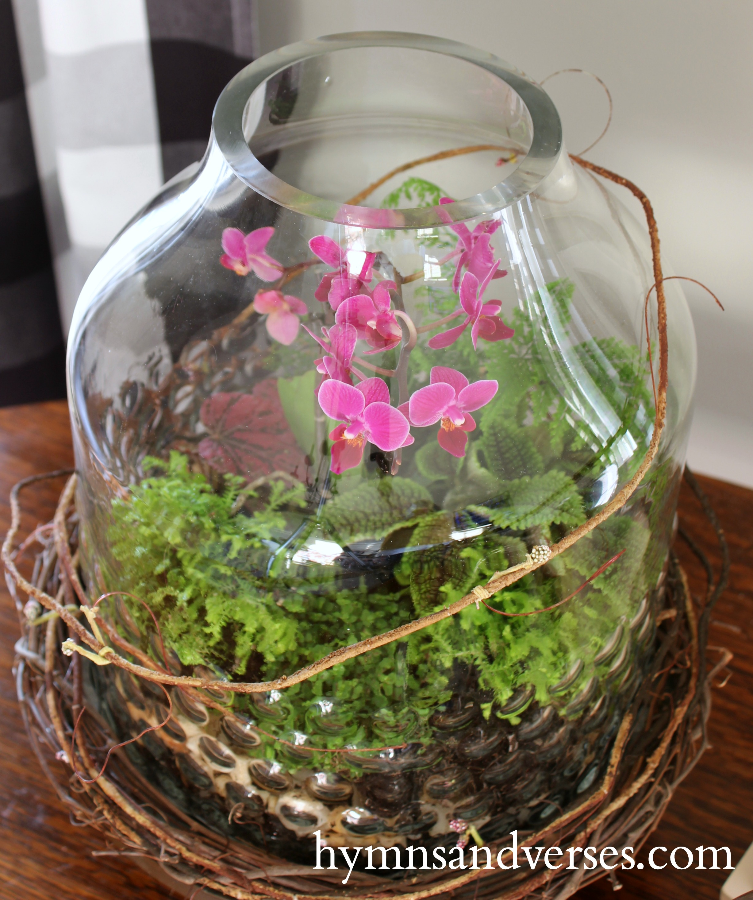 Spring Mini Orchid Terrarium Hymns And Verses