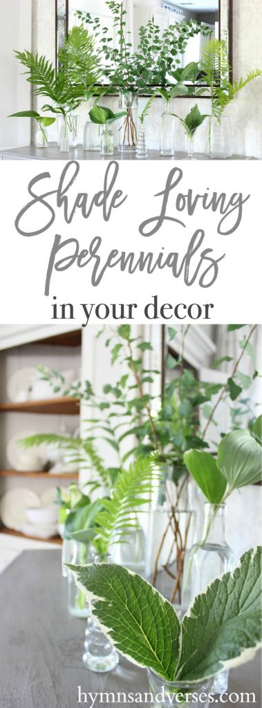Shade Loving Perennials in Decor