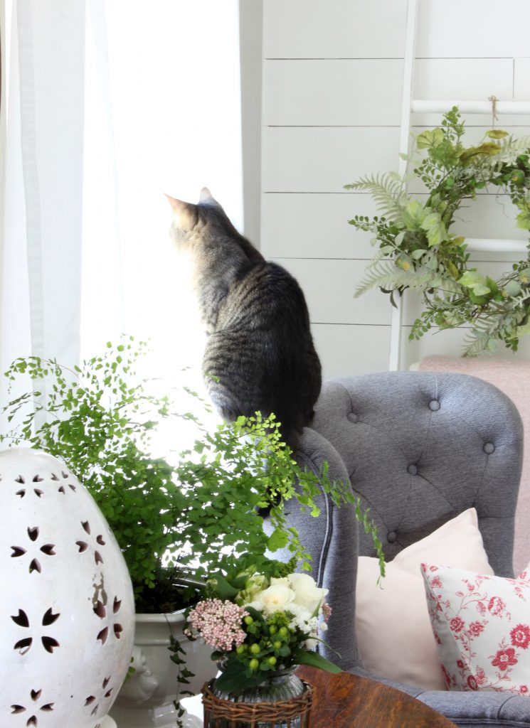 Cat - Spring Cottage Style
