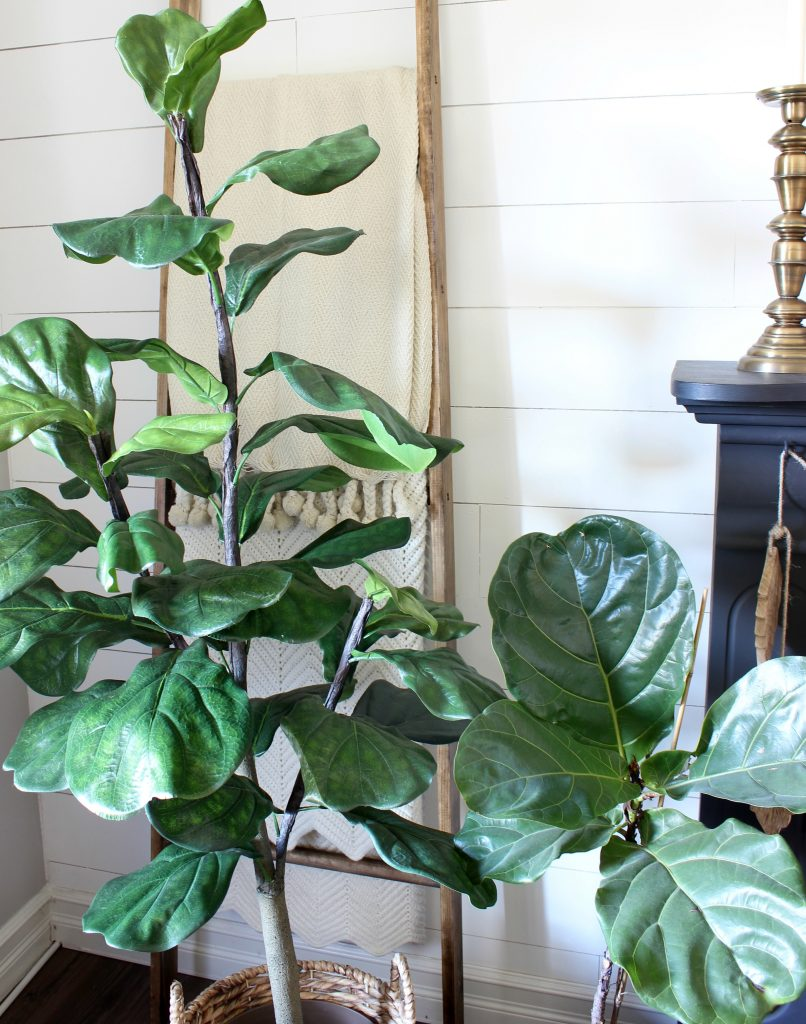 Faux Fiddle Leaf Fig Comparison