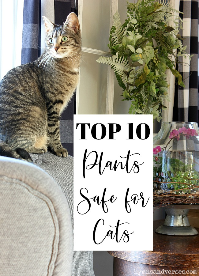 Top Ten Plants Safe for Cats